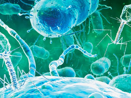 Лечение бактериального коньюктивита у взрослых